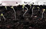 Рассада томатов тонкая и длинная: что делать и в чем причина