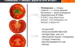В поисках ответа: помидор — это овощ, фрукт или ягода?