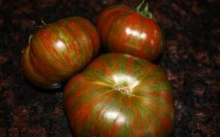 Характеристика томата полосатый шоколад: отзывы и фото