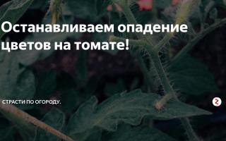 Как предупредить опадание цветов на помидорах