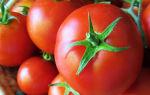 Какие существуют томаты: сорта и гибриды