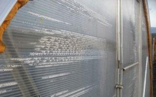 Почему появляется и чем вреден конденсат в теплице из поликарбоната?