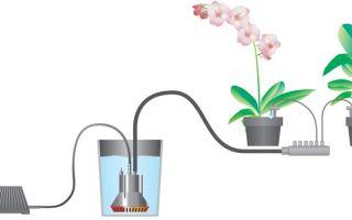 Автополив цветов: принцип работы и преимущества
