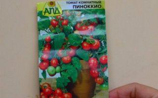 Характеристика томата пиноккио: отзывы и фото