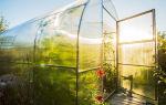 Почему сохнут и закручиваются листья у помидоров в теплице