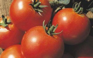 Томаты слот: характеристика сорта и особенности культивирования
