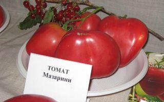 Характеристика томата мазарини: отзывы и фото (кто сажал)