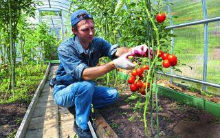 Как обеспечить правильный уход за помидорами в июле в теплице