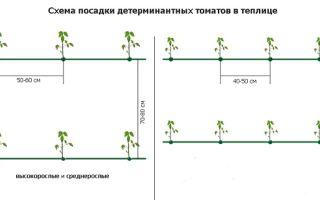 Как формируется схема посадки помидор в теплице из поликарбоната