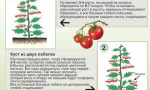 Как и когда прищипывать помидоры в теплице