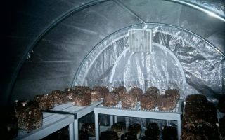 Выращивание китайских огурцов: выбор сорта и правила ухода