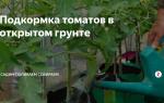 Как применять удобрения для помидоров в открытом грунте