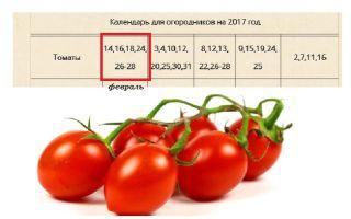 Посадка помидоров в 2017 году по лунному календарю: технология и лучшие дни