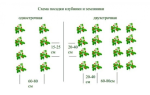 Технология посадки клубники осенью