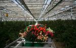 Что выгодно выращивать в теплицах начинающим огородникам?