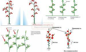 Как пасынковать помидоры в теплице: советы опытных огородников