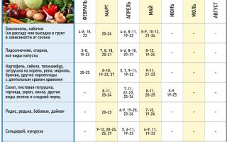 Когда сажать баклажаны на рассаду в 2018 году: сроки посева и высадки в грунт