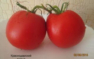 Лучшие сорта помидоров: краснодарский