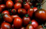 Описание сорта томата черный мавр