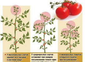 Помидоры волгоградские: характеристика, правила формирования и высадки