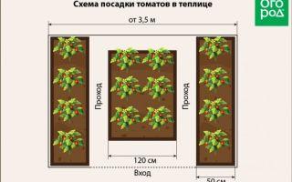 Технология посадки томатов в теплице: расстояние между рядами и саженцами