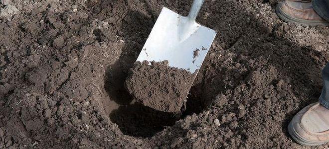 Как должна проходить подготовка земли к посадке?