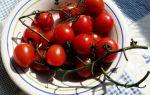 Помидоры черри: сорта, этапы выращивания и варианты приготовления