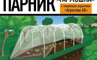 Великолепная георгина мингус: посадка и уход