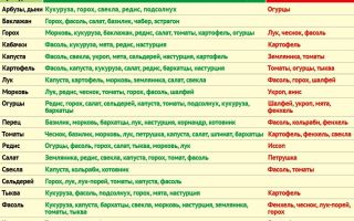Особенности совместимости растений на грядке