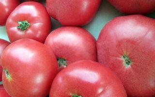 Крупные помидоры: лучшие сорта и особенности выращивания