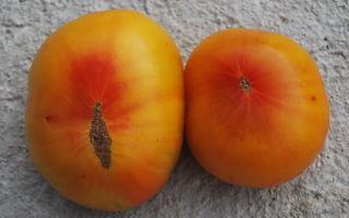 Лучшие сорта желто-красных помидоров