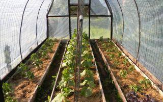 Что можно выращивать в теплице из поликарбоната