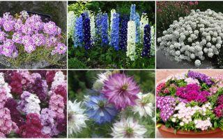 10 цветов, которые можно сеять под зиму семенами