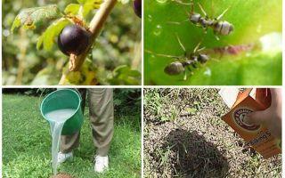 Проблемы садового участка: как вывести муравьев