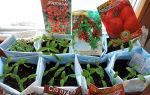Ранний томат хоровод: отзывы фото