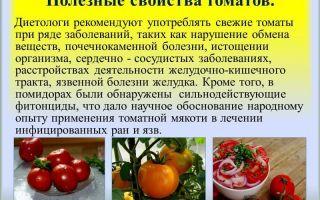 О пользе и вреде помидоров для организма