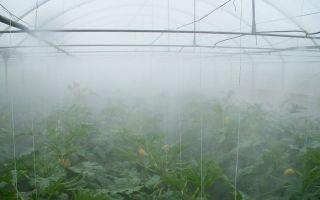 Как сделать туманообразователь для теплиц своими руками?