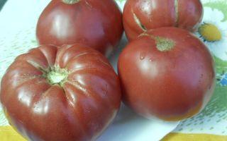 Болгарские помидоры: сортовые преимущества и польза