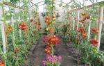 Как вырастить томаты в мае