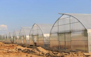 Фермерские теплицы: характеристика, преимущества и недостатки основных видов