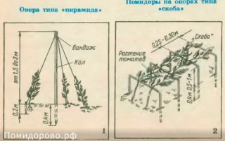 Посадка помидоров в открытый грунт в украине: технология, схемы и оптимальные сроки