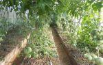 Основные требования к мульчированию помидор в теплице