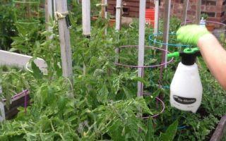 Насколько рентабелен бизнес-план выращивания огурцов в теплице?
