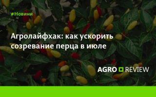 Лучшая почва для посадки помидоров