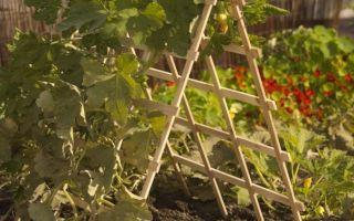 Разные варианты шпалеры для помидор своими руками (с фото и видео)