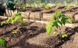 Удобрения для огурцов: виды и особенности внесения
