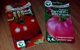 Характеристика сорта помидора клуша: отзывы и фото