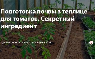 Комплексная подготовка почвы в теплице под помидоры весной