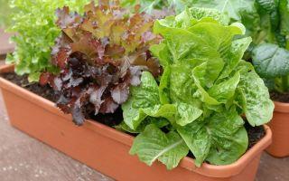Применение шпалерной сетки для выращивания огурцов в теплице
