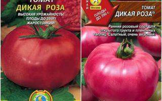 Характеристика томата дикая роза: описание и отзывы огородников
